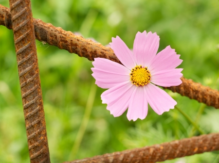 concep: Pink flower and urbanistic architecture Concep tual registration