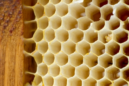 Beer honey in honeycombs  Natural sweet  Stock Photo - 16508760
