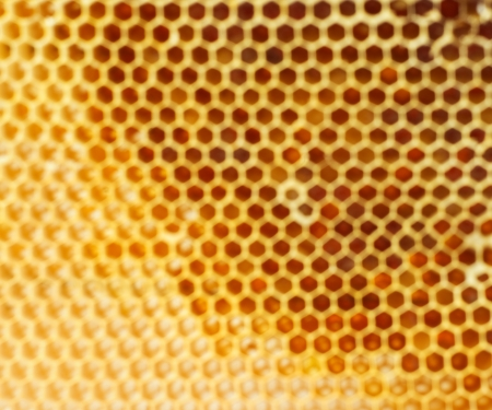 Beer honey in honeycombs Abstract background  photo