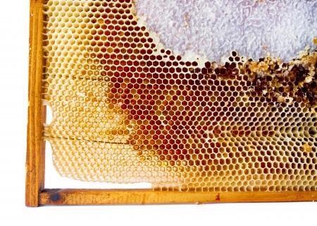 fresh honey in comb  Beer honey in honeycombs  Natural sweet Stock Photo - 16944625
