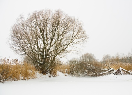 River landscape in winter  Nature composition  Stock Photo - 16944621