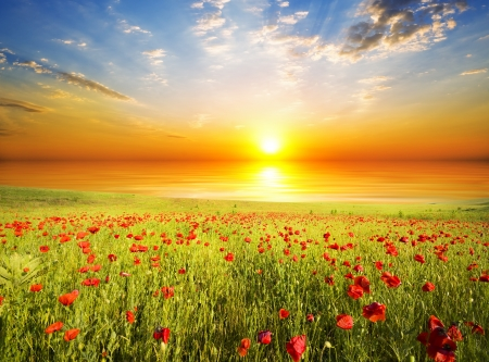 red poppies on green field: field with green grass and red poppies against the sunset sky Stock Photo