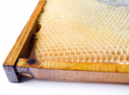 fresh honey in comb  Beer honey in honeycombs  Natural sweet  Stock Photo - 17147872