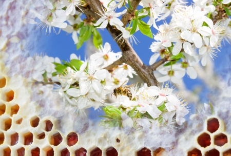 fresh honey in comb  Beer honey in honeycombs  Natural sweet Stock Photo - 17449831