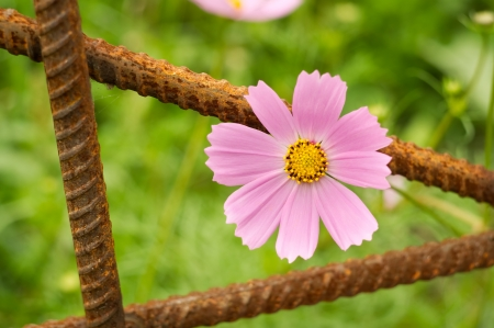 urbanistic: Pink flower and urbanistic architecture Concep tual registration