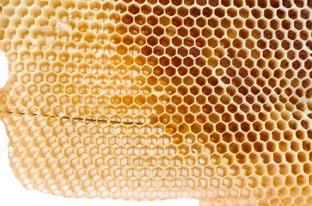 Beer honey in honeycombs  Natural sweet Stock Photo - 17907612