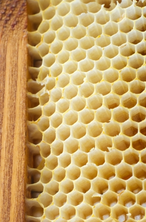 Beer honeycombs on a wooden framework close up Stock Photo - 17907838