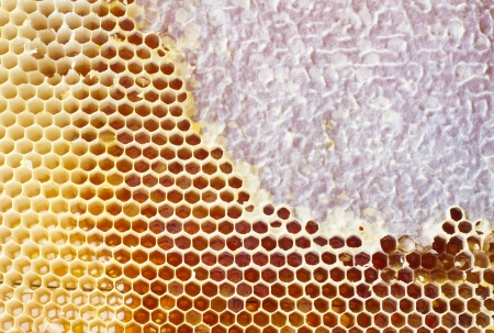 Beer honey in honeycombs Natural sweet Stock Photo - 18284463