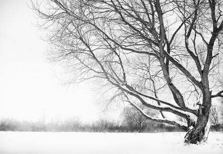 riverside landscape: winter river and trees in winter season