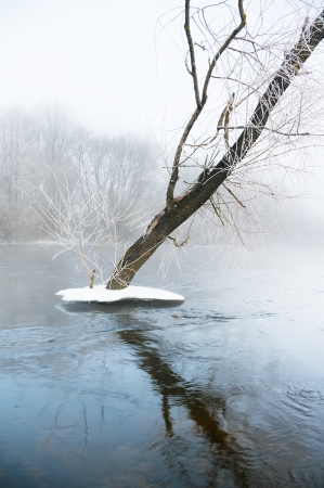 hoar: winter river and trees in winter season