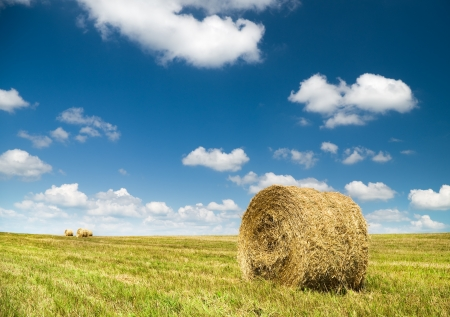 hayroll: Bales of hay in a large field  Nature composition