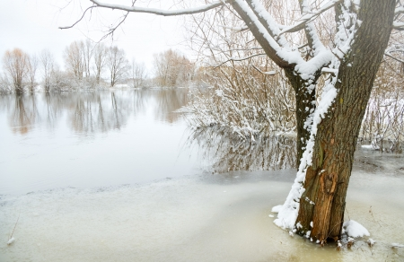 winter river and trees in winter season photo