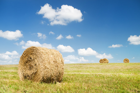 Bales of hay in a large field  Nature composition  photo