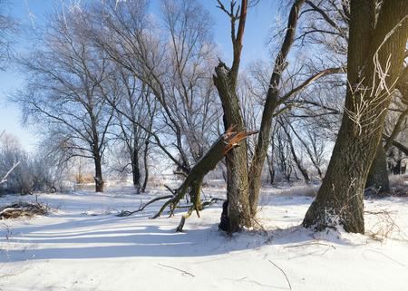 frozen trees in winter season  Nature composition  photo