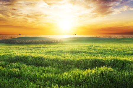 夕焼けの空を背景に緑の芝生のフィールドです。 写真素材
