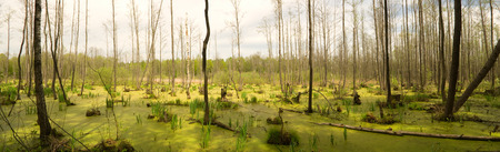 black moor: Bog in wood. Polesye, Ukraine. Stock Photo