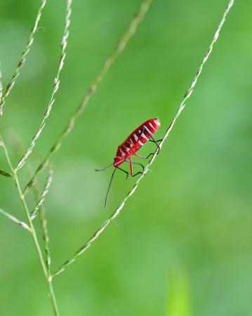 The red bug walk through tiny grass Stock Photo - 19052277