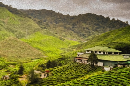 Tea Plantation with oil paint background