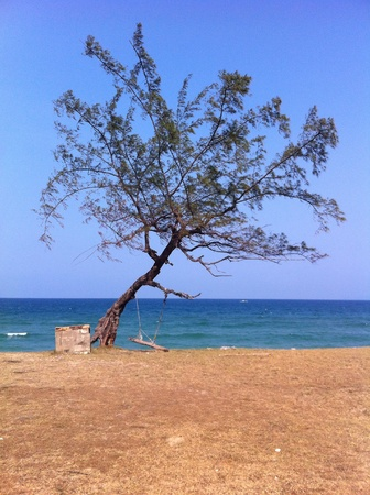 Single tree at beach with blue sky.