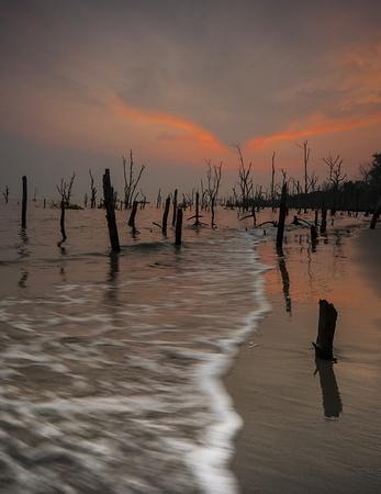 Vista puesta del sol con el �rbol viejo