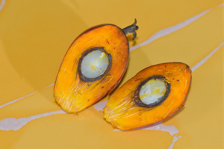 cut off: The cut off palm oil fruit. Stock Photo