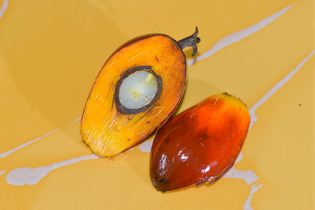 The cut off palm oil fruit. Stock Photo