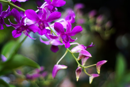 Orchid Flower. Stock Photo