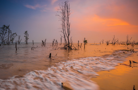 Minimalist Concept.Bora-Bora At Beach,Sunset.With Death Trees. Stock Photo