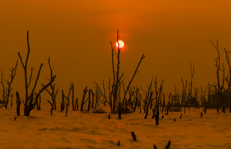 Minimalist Concept.Sunset At Beach With Death Trees.Silhouette Photo.