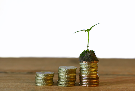 Investment Concept,Sprout Growth On Stack Golden Coin.Wood Table. Stock Photo