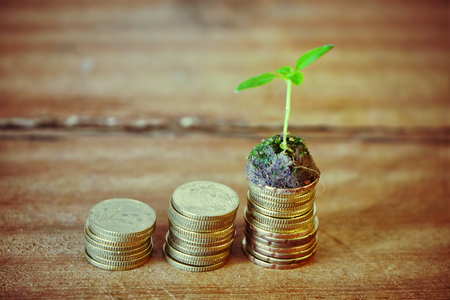 sprout growth: Investment Concept,Sprout Growth On Stack Golden Coin.Wood Table. Stock Photo