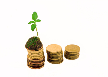 tenure: Financial Concept.Sprout Growth On Stack Coin.Isolated On White Background With Selective Focus.