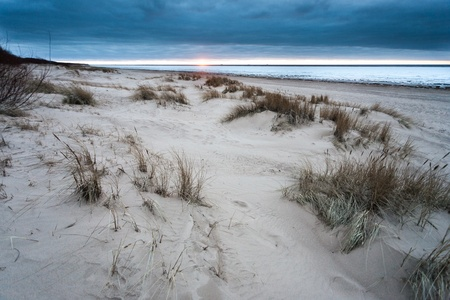 Sand shrubs on sunset photo
