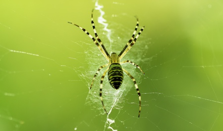 Spider on the Web. macro