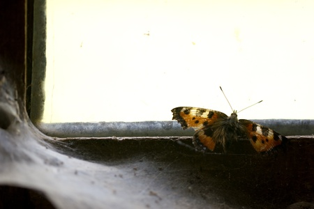 butterfly on the window of an old abandoned house