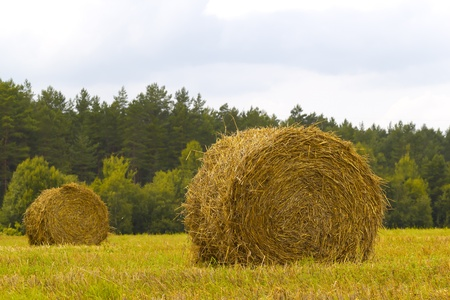 Two stacks of straw in the field. summer