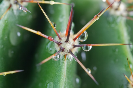 drops of water on a cactus. closeup Stock Photo