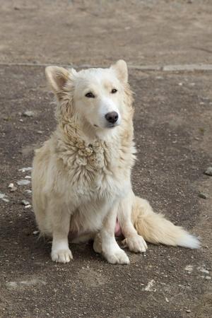 sad stray dog on the street