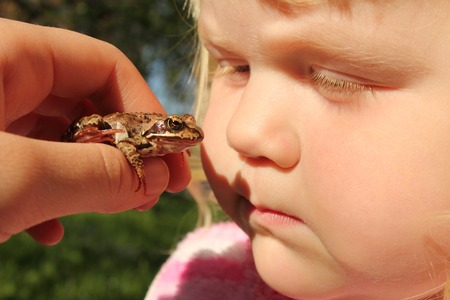 little girl gets acquainted with wildlife - wild frog Stockfoto