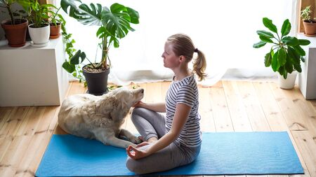 stay at home. woman doing yoga in the living room during quarantine, a large dog is lying nearby. Stock Photo - 149129858