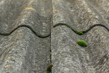 angled view: Close-up on an old mossy lichen and slate. Background