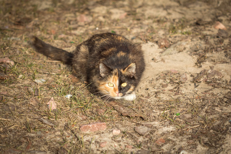 lurking: Young cat with a double coloration on the face lurking in the yard