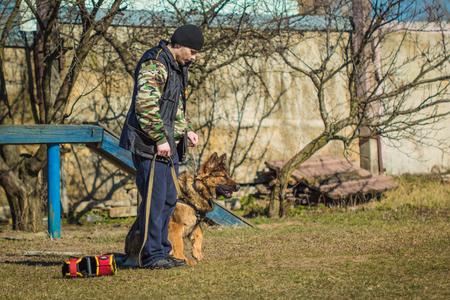 obediencia: Gomel, Bielorrusia - 27 de marzo 2016: El hombre en el entrenamiento en obediencia a pastor alem�n. Perro que muerde. Perro Lobo alsaciana. Deutscher, perro Editorial