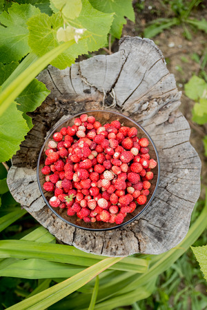 Strawberries in a bowl on an old tree stump. View from above Stock Photo