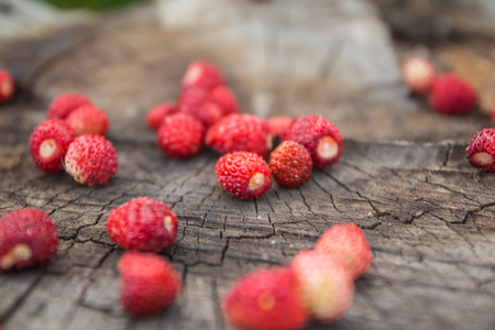 'wild strawberry: A handful of ripe red berries of wild strawberry in a blur