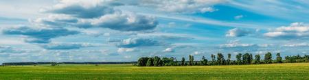 Paysage panoramique avec champ vert et petites plantations forestières dans le beau ciel nuageux