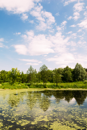 Landscape of marsh with trees on the bank. Summer. Nobody