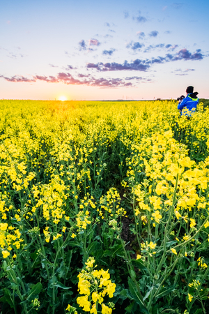canola: A man in a field with Canola photographs