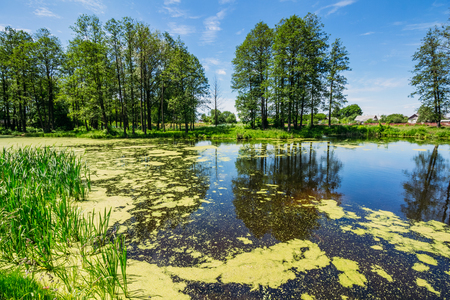 Swamp in the summer with reflections on the water