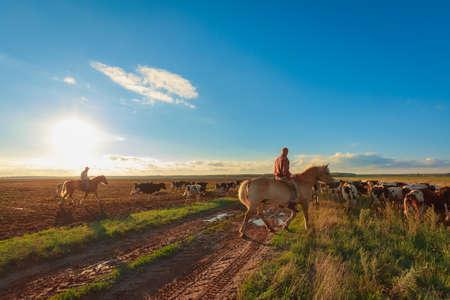 Pastores a caballo pastan vacas Foto de archivo